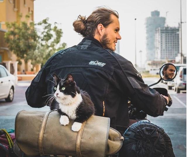 кошка на мотоцикле