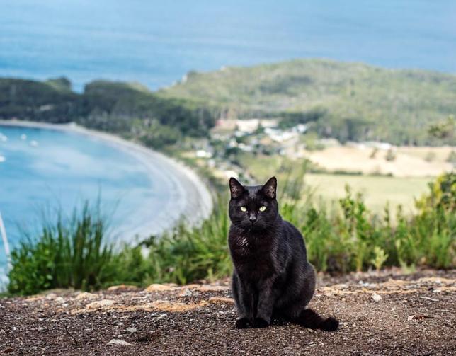 В путешествие — с котом