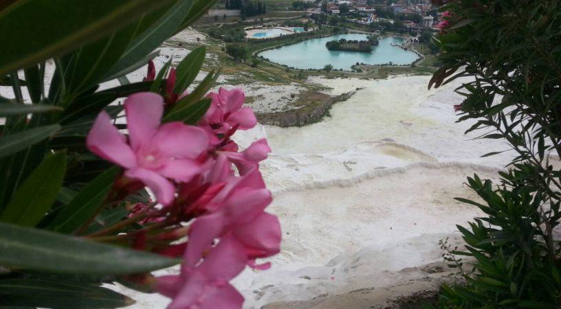 Цветы Заккум